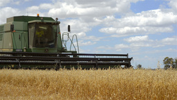 Header Harvesting Oats Crop in Cloudy Weather Footage