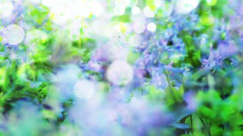 Flower 23216 Stock Video Footage