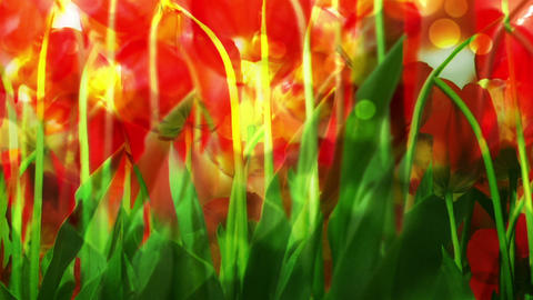 Flower 83458 Stock Video Footage