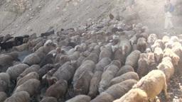 Herding sheep in Northern Pakistan Stock Video Footage