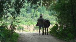 Old man with buffalo in rural China Stock Video Footage