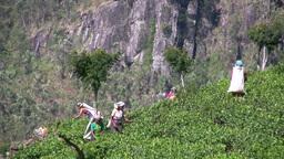 Tea pickers in the fields in Sri Lanka Stock Video Footage