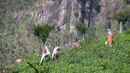 Tea pickers in the fields in Sri Lanka Stock Video Footage