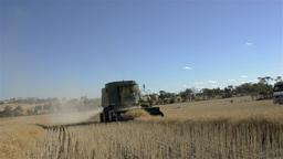 Harvesting a Canola Crop under Blue Skies Stock Video Footage