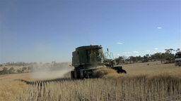 Harvesting a Canola Crop under Blue Skies Stock Video Footage