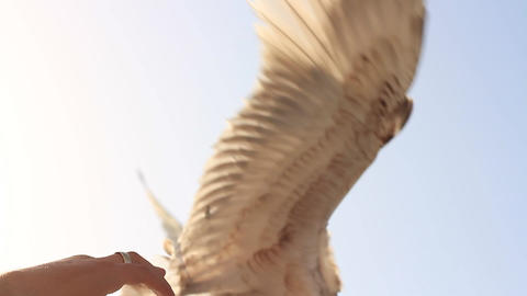 Turkish People & Culture