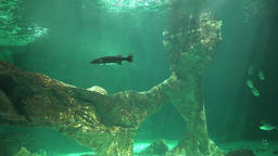 Underwater Undersea And Ocean Floor Footage