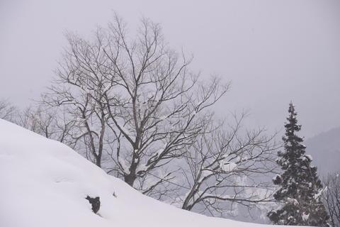 Spot;Gokayama;Ainokura;Hands in Prayer;Village;Japan Fotografía