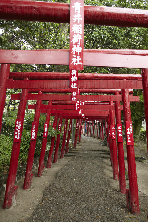 Aoi;Aso;Shrine;Japan Fotografía