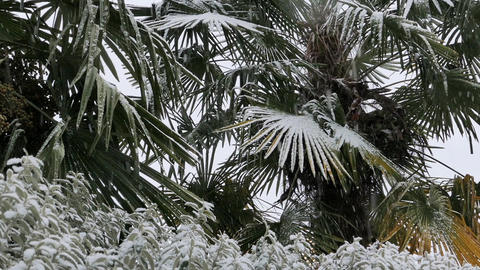Palm Trees In Snow Storm Footage