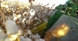 Cotton harvest using a mechanical cotton picker Footage