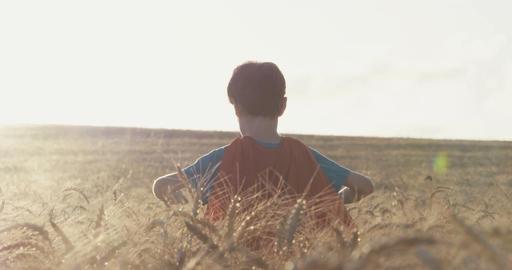 Superhero boy standing in a golden wheat field during sunset ビデオ