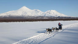 Sled dog race on background of Kamchatka volcanoes Footage