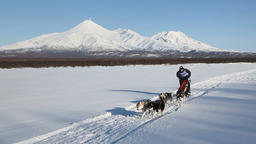 Sled dog racing on background of Kamchatka volcanoes Footage