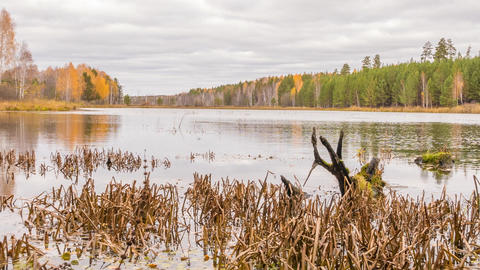 Rotten snag in the pond. Autumn, Russia. Panorama. Time Lapse Footage