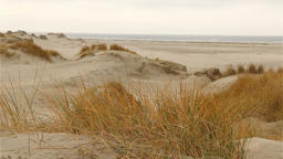 Marram grass blowing in the wind in front of dune coast in romo, denmark Footage