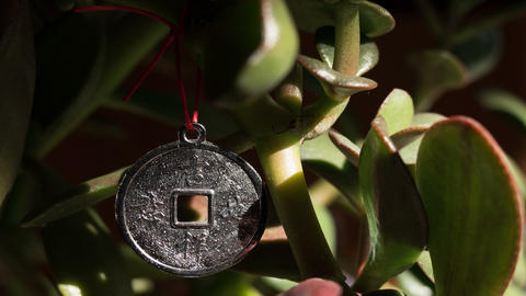 Chinese Coin Money Tree 4K Animation