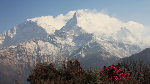 Dhaulagiri Rhododendrons Time Lapse Zoom Footage