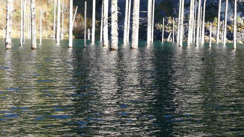 Kaindy Lake Flooded Forest Autumn 4K Footage