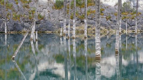 Kaindy Lake Flooded Forest Kazakhstan 4K Footage