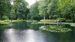 Pond with water lilies at English garden in Pillnitz Castle Park Footage