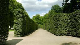 Part of Italian style garden at Pillnitz Castle Park Footage
