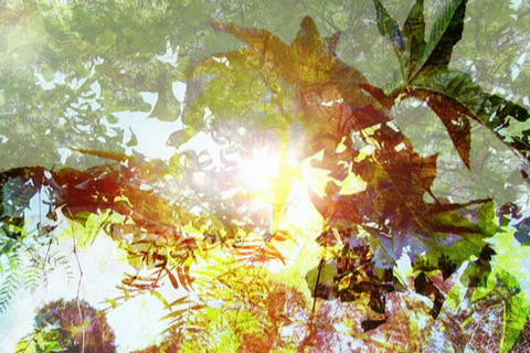 Nature Forest Crossfade Stock Video Footage