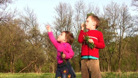 children with dandelion Stock Video Footage