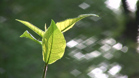 leaf wind Footage