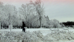 White Trees In Winter Natural Landscape Stock Video Footage