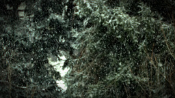 Heavy Winter Snow Fall Against Greenery Background... Stock Video Footage