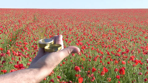 Targeting on a poppy field Stock Video Footage