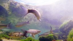 School of fish Stock Video Footage