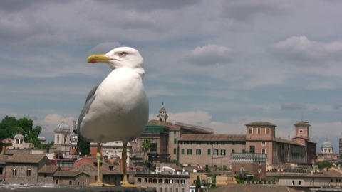 Urban seagull Stock Video Footage
