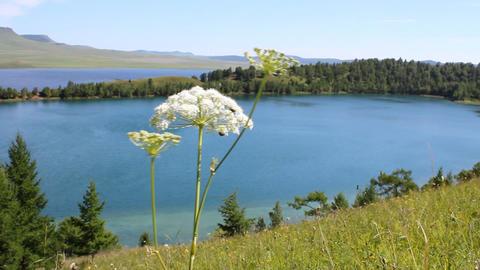 Summer Lake Stock Video Footage