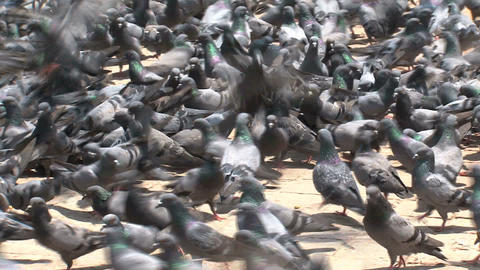 Close up from pigeons flying Footage