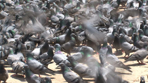 Close up from pigeons flying Stock Video Footage