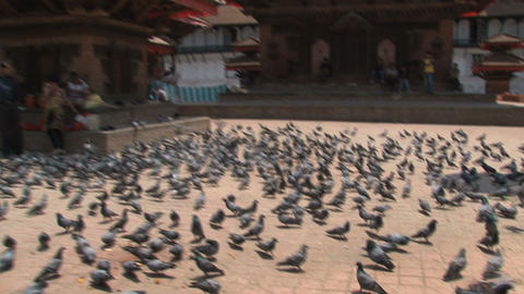 Pigeons drinking water zoom out to square full of Stock Video Footage