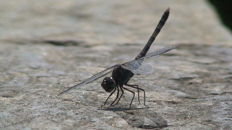 Dragonfly moving his feet and flies away Live Action