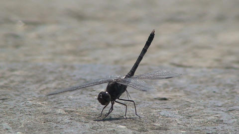 Dragonfly moving his feet Stock Video Footage