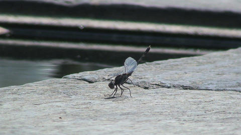 Dragonfly close to the water Footage