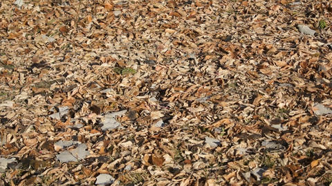 Fallen Autumn Leaves On The Ground stock footage