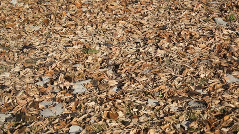 Fallen autumn leaves on the ground Stock Video Footage