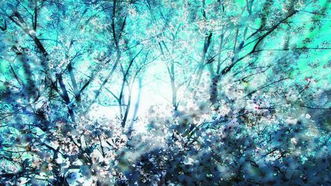 Blue Tree 42134 Stock Video Footage
