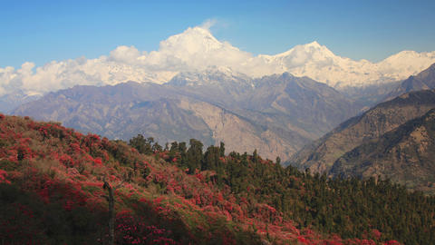 Dhaulagiri Rhododendrons Time Lapse Footage