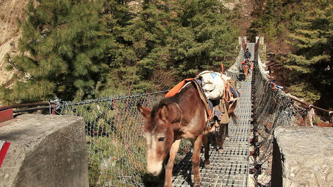 Transportation Goods Mules Hanging Bridge Footage