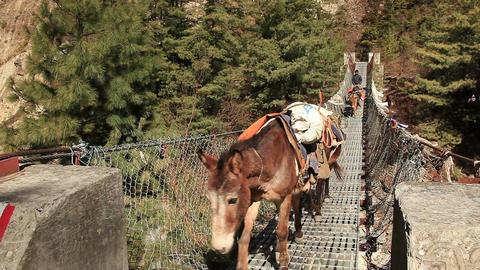 Transportation Goods Mules Hanging Bridge Footage