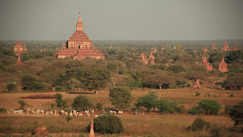 Bagan Temples Morning Footage