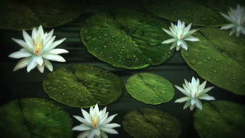 Water And Flowers (1) Animation