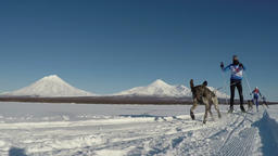 Skijor races (skijoring) on background of Kamchatka volcanoes ビデオ